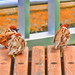 Sparrows at a bench of the seaside