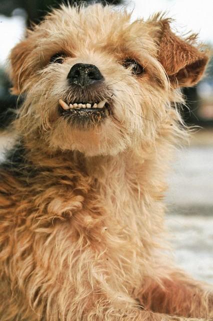 perro feo un perrito belfo que me encontr233 por ah237 en