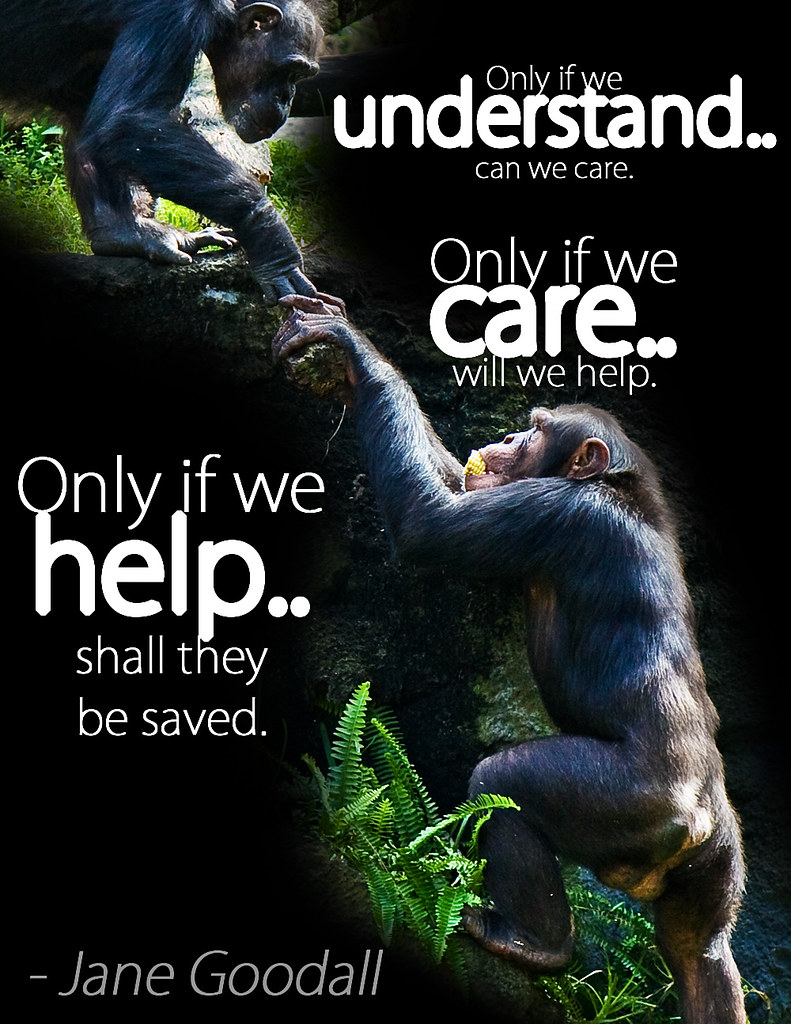 Animal Cruelty Quotes Jane Goodall Quote  One Of My Favorite Jane Goodall Quotes.…  Flickr