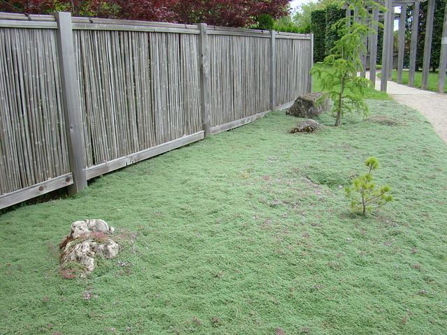 Japanese Moss Grass Japanese Moss/grass
