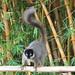 Lumur park