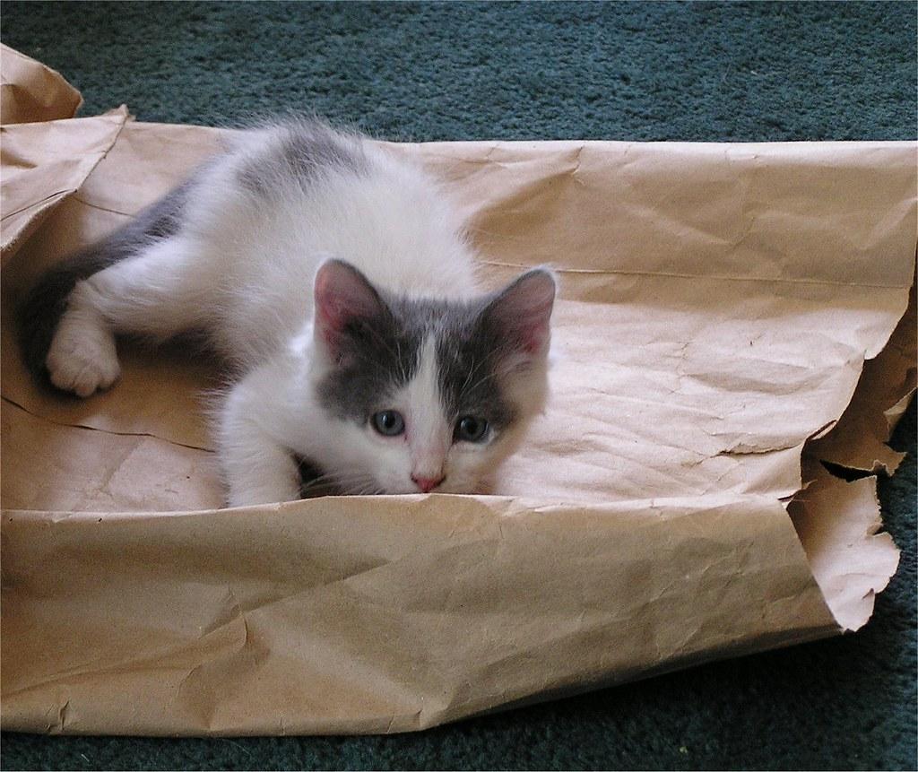 Kitten Squirt 32