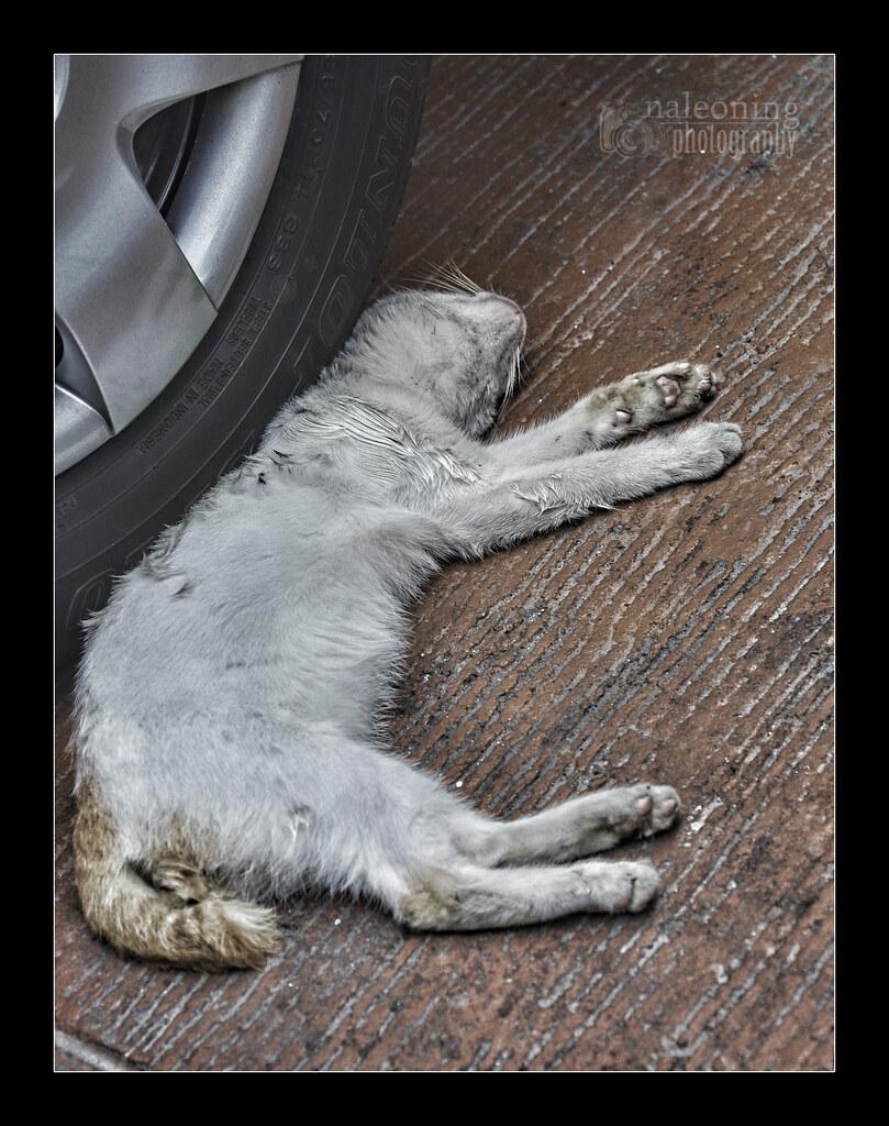 cat adoption houston