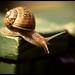 Snail_Macro