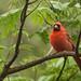 Cardinal Photo Op