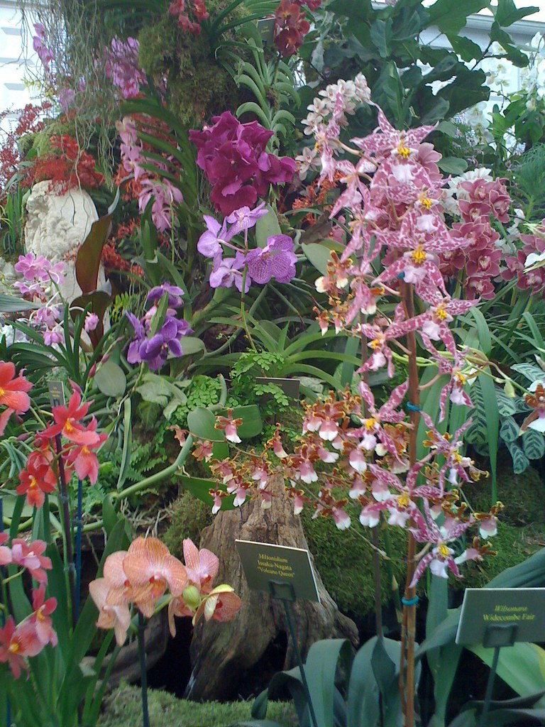 Chelsea flower show is held