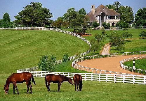 Lexington Horse Tours