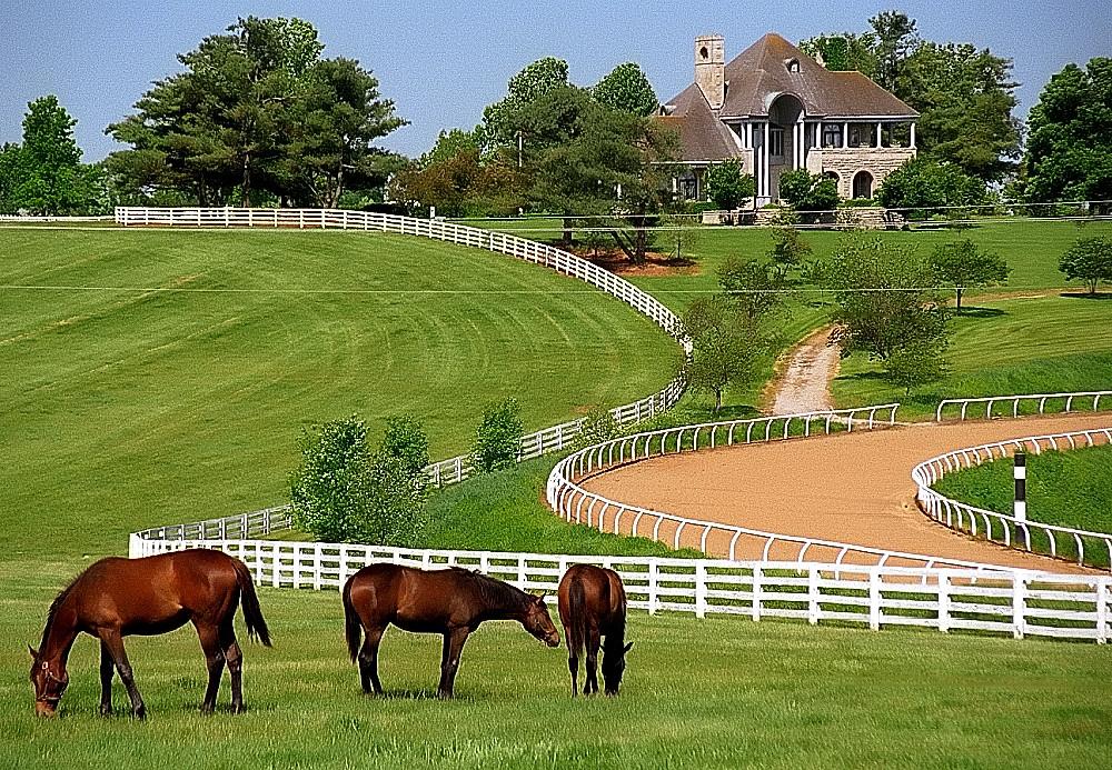 Lexington Kentucky Donamire Farm David Ohmer Flickr