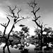 Trees Of The Underworld