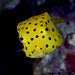 019_adj_DSC0354 aptly named boxfish
