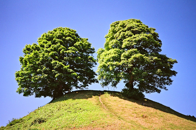 two trees on a hill marc davies flickr. Black Bedroom Furniture Sets. Home Design Ideas