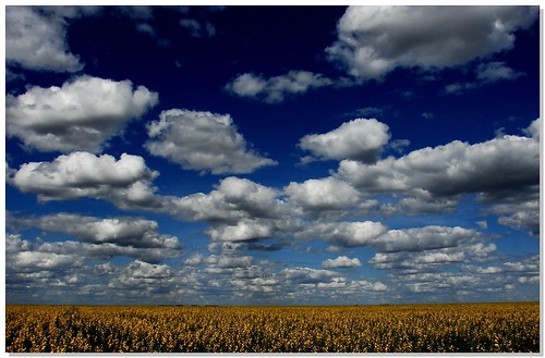 Field Of Clouds | by Diogo Gasparetto