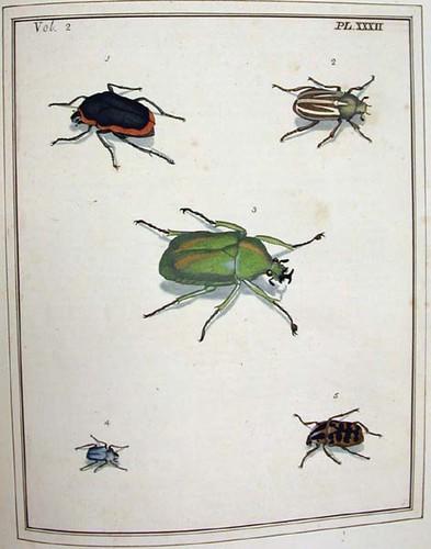 Dru Drury Illustrations Of Natural History
