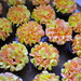 Summer Flower Mini Cupcakes