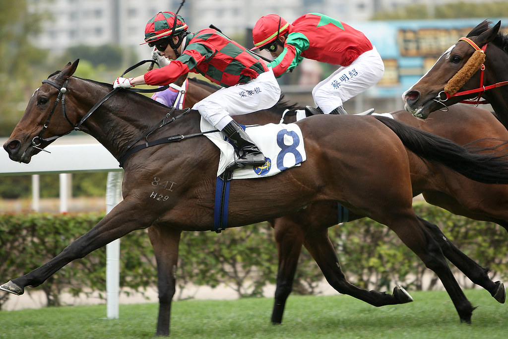 Ia280403 hong kong jockey club apprentice horse name for Puerta 4 jockey club