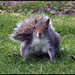 Befriending a squirrrel