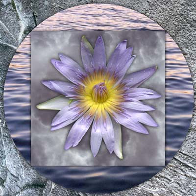 Flower mandalas: Waterlily