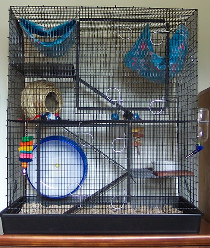 rat cage this is my new martin 39 s 695 rat cage. Black Bedroom Furniture Sets. Home Design Ideas