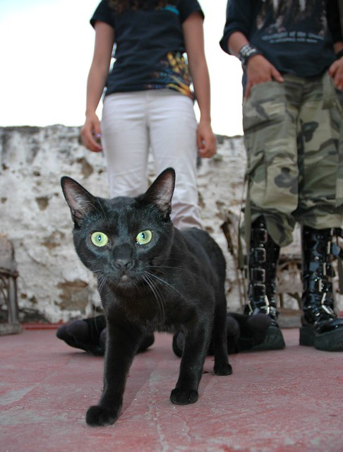 Neutered Cat Peeing Straight Back