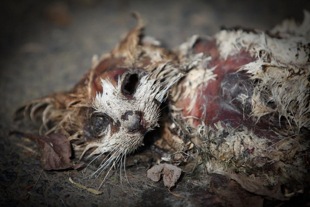 dead cat trankmast flickr