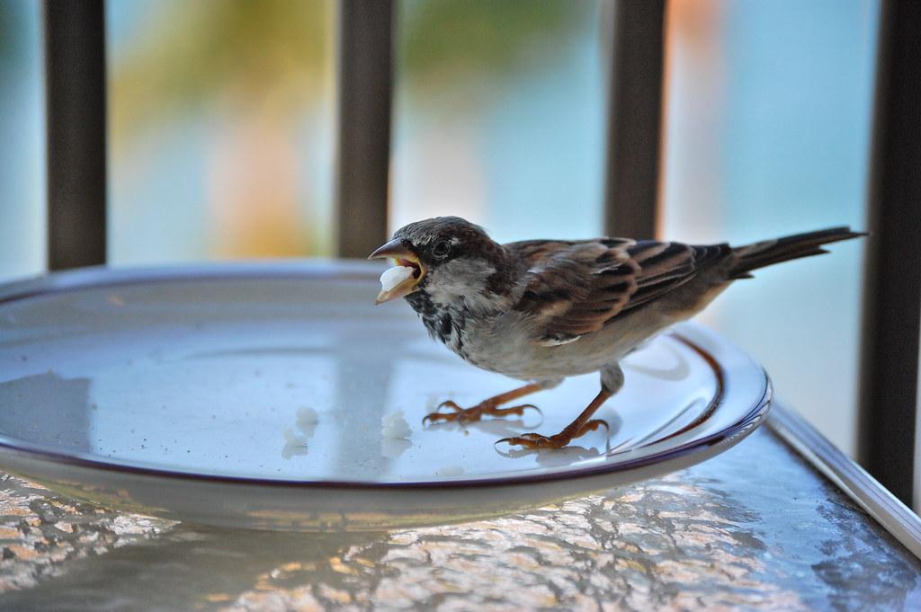Bird Eating Rice Mana Kai Resort In Kihei Taken On The