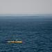 Lone Mark 1 (surf ski) kayaker, outside Morro Rock harbor, following a grek whale migrating north, Morro Bay, CA