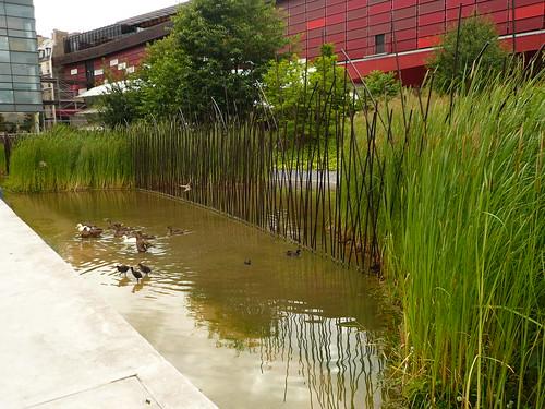 Les canards et les oiseaux du jardin du mus e du quai bran for Jardin quai branly