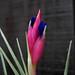 Mystery flower DSCN0714