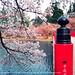 West Moat Nishibori (Hirosaki Japan). © Glenn Waters.   (Explored). Over 12,000 visits to this image.