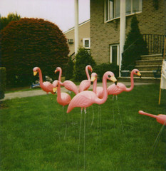 you've been flocked! | by ChristinaBrown