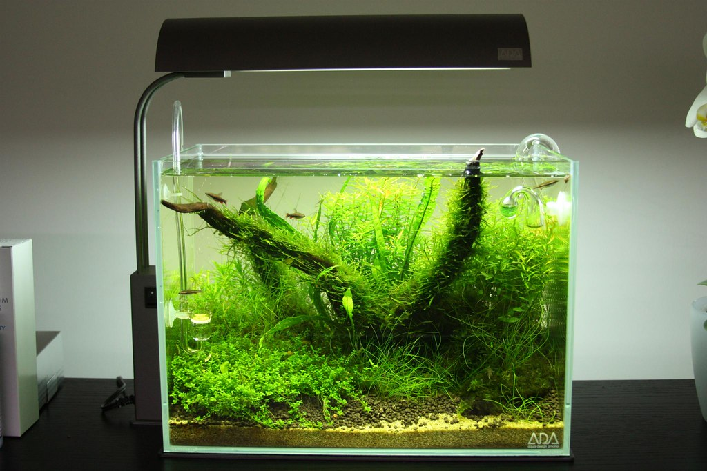 Ada cube garden mini m my fresh new ada nano tank the for Ada fish tank