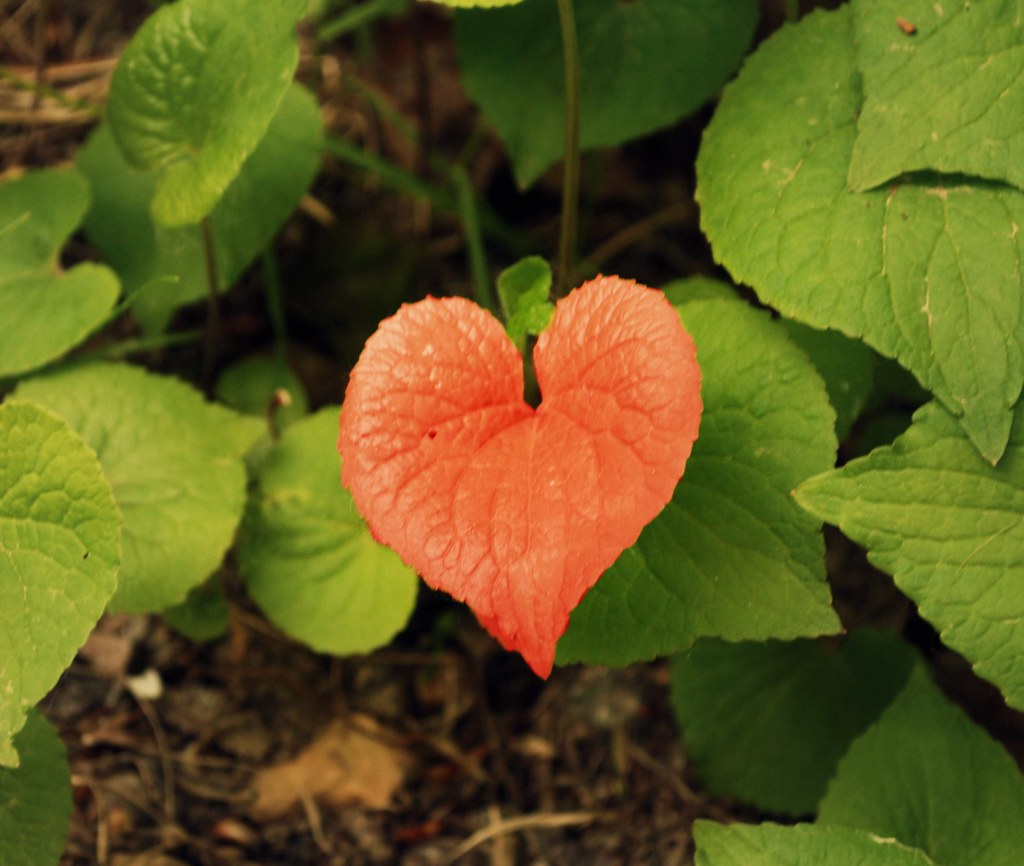Heart Images In Nature I Heart Nature