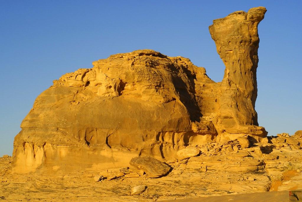 city of monash landscape guidelines