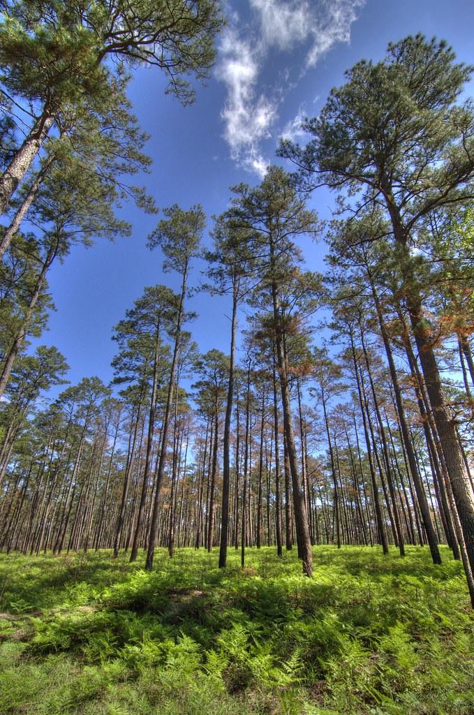 Sam Houston National Forest  Sam Houston National Forest