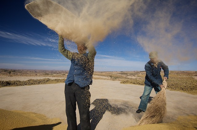 Winnowing Grain In China Loess Plateau Shaanxi China