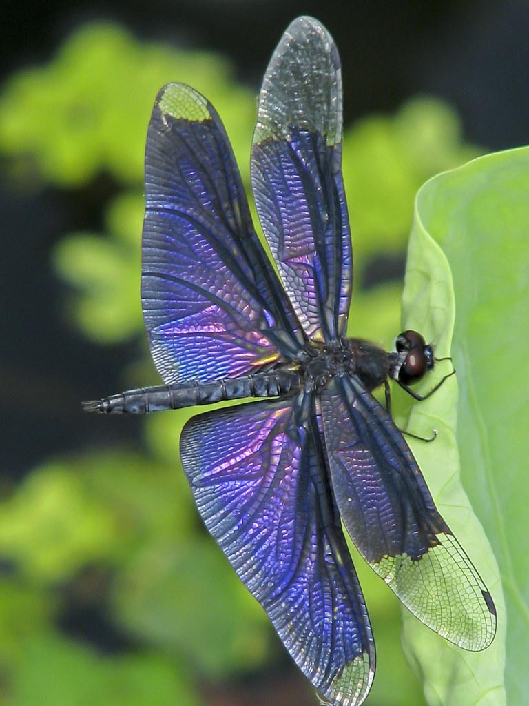 Silver Iridescent Dragonfly Pin - Tradesy |Iridescent Dragonflies