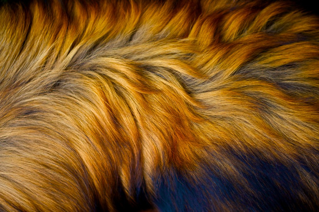 Close Up Of Dog S Fur