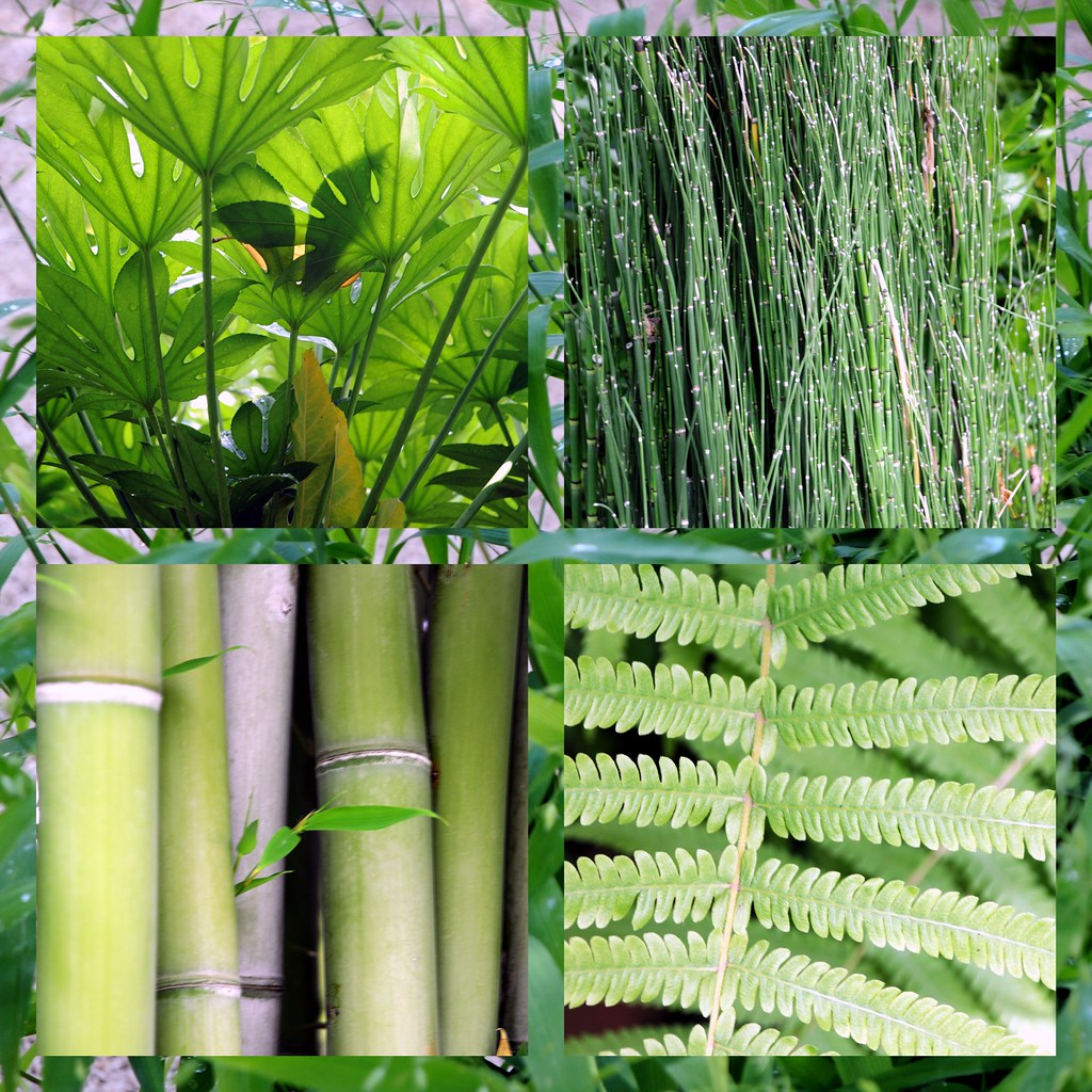 Japanese Garden Plants: Japanese Garden Ft Worth Texas Green Plants Tropical Reeds