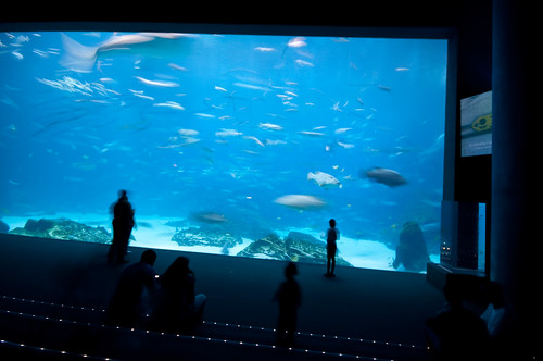 IMG_3342Atlanta Aquarium (The OMG Window) | by @HandstandSam