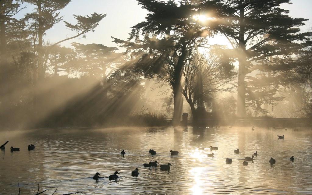 Nature crepuscular rays in golden gate park crepuscular for Trodel mobel