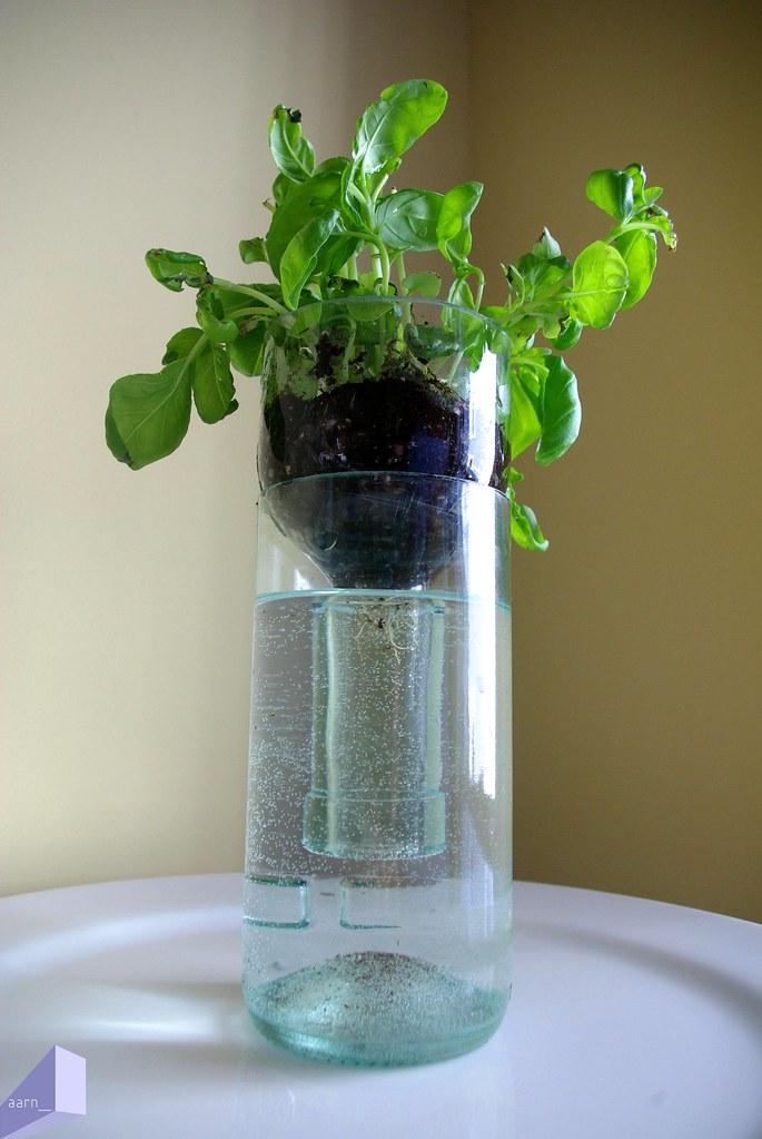 Aarn Cleaved Wine Bottle Hydroponic Herbs Basil That Is