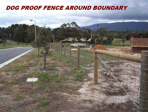 Dog Proof Fence Around Boundary  Whittlesea Contracting. Wrongful Death Lawyer Los Angeles. Csid Identity Protection Canon Reader Printer. Types Of Single Sign On Sage Payroll Download. Where To Buy Gold In Chicago. Pancreatic Cancer Treatment Chemotherapy. Web Based Application Development. Aesthetic Surgery Center Day Care Bellevue Wa. Small Business Technology News