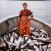 me and sockeye salmon in cook inlet