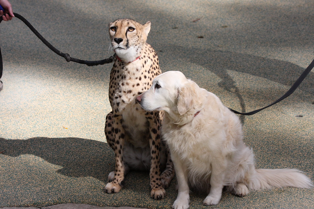 Best Friends Dog Kennels Canberra