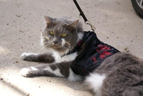 kitty holster 49