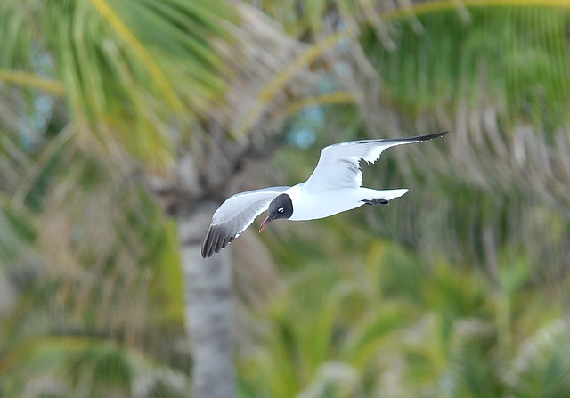 Coco Cay Nature Walk Review