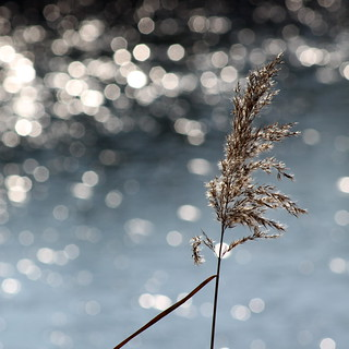 reed | by jenny downing