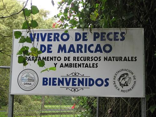 Vivero de peces maricao by lacaos for Vivero para peces