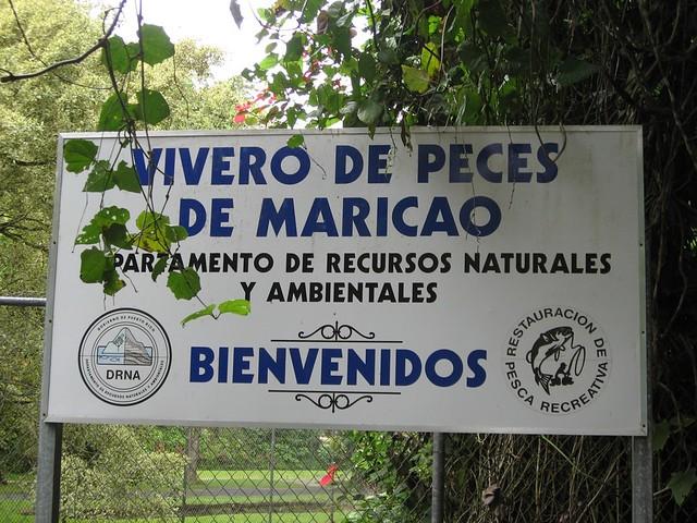 Vivero de peces maricao lacaos flickr for Vivero para peces
