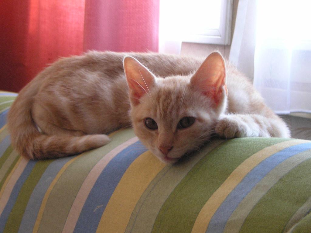 Le chat de ma fille sur le lit ou sur le canap for Sur le canape ou dans le canape